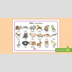 * New * Pets Word Mat Englishfrench  Domestic Animals, Pets Word Mat Pet