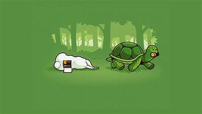 Simple Humor Wallpapers Background Funny Computer Turtle