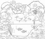 Pond Coloring Duck Habitat Vector Stagno Colorare Animals Colorear Canards Mare Aux Kleurende Anatra Coloritura Dell Coloriage Disegni Pato Printable sketch template