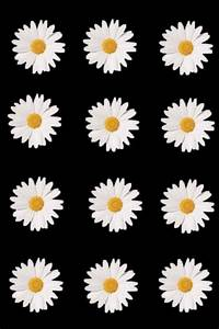 daisy flowers iphone wallpaper | Tumblr
