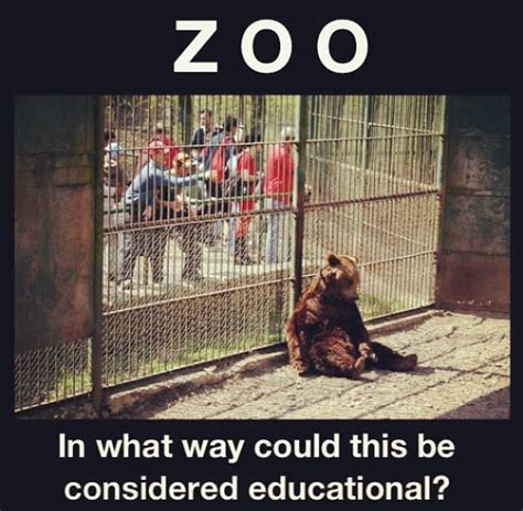 zoos bad animals entertainment connected nature through times were