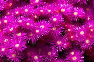 62, Purple, Flowers, Background, On, Wallpapersafari