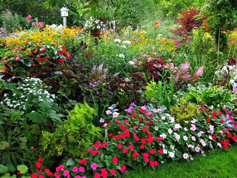 10 More Flowering Annuals For The Prettiest Garden Ever