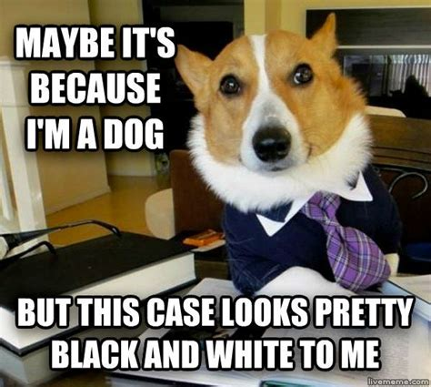 Law Dog Meme - 1000 images about funny legal stuff on pinterest lawyers funny and law and order