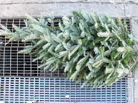 what to do with your old christmas tree brooklyn feed