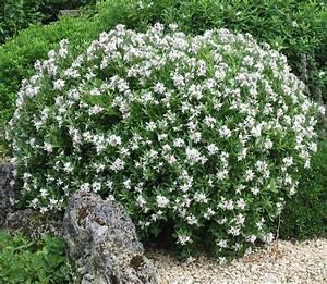 Gardenia Jasminoides Pflege : las mejores plantas de sombra para un jard n de lujo ~ A.2002-acura-tl-radio.info Haus und Dekorationen