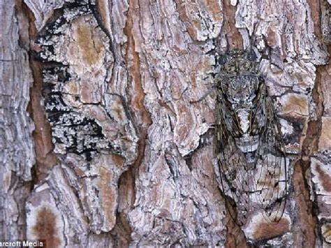Camouflage And Mimicry Evolution Power Point