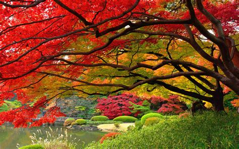 autumn wallpaper japan hd hd desktop wallpapers  hd