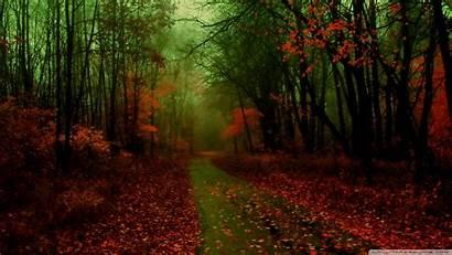 Autumn Wallpapers Scene Nature Desktop Background Misty