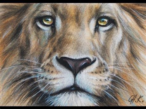 colored pencil drawing animal wildlife portrait art  ch
