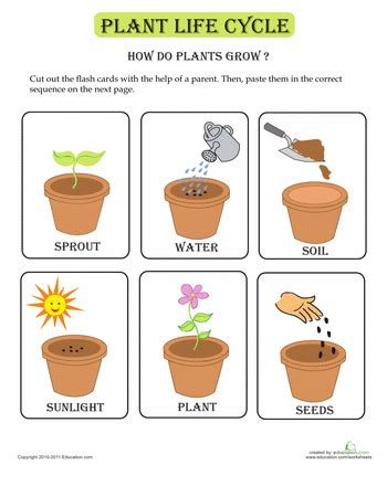 plant cycle flash cards theme flowers