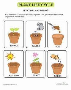 Plant Life Cycle Flash Cards Theme Spring Flowers