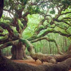amazing trees dusky 39 s wonders