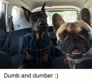 25+ Best Memes About Dumb and Dumber | Dumb and Dumber Memes