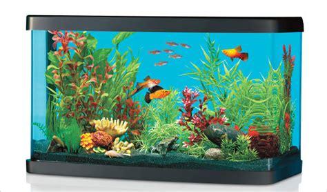 choose  freshwater fish   pet