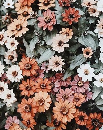 Aesthetic Flower Wallpapers Floral Desktop Flowers Spring