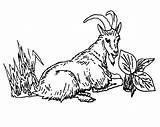 Goat Mountain Coloring Line Eating Grass Drawing Cartoon Getdrawings Colorluna sketch template