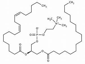 Glentham Life Sciences | GL7970 - L-alpha ...  Phosphatidylcholine