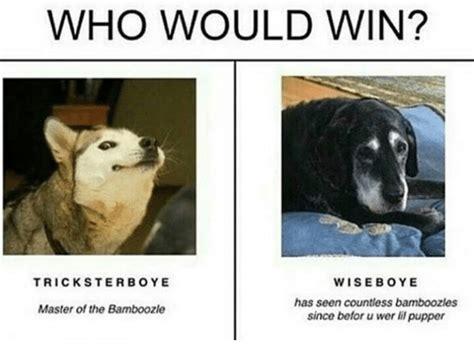win wiseboye   countless bamboozles