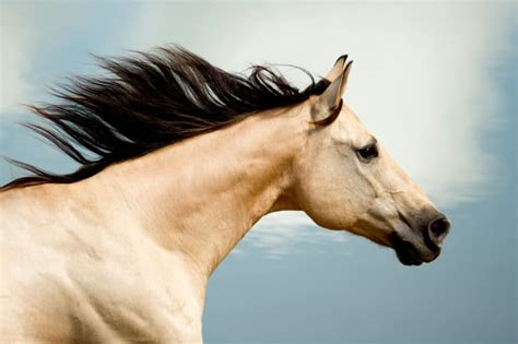 animals fast animal fastest cheetah horse run istock mph running quarter besides another flying shape