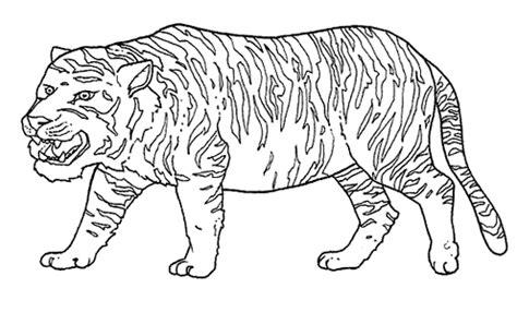 il mondo degli animali disegni da stampare  colorare