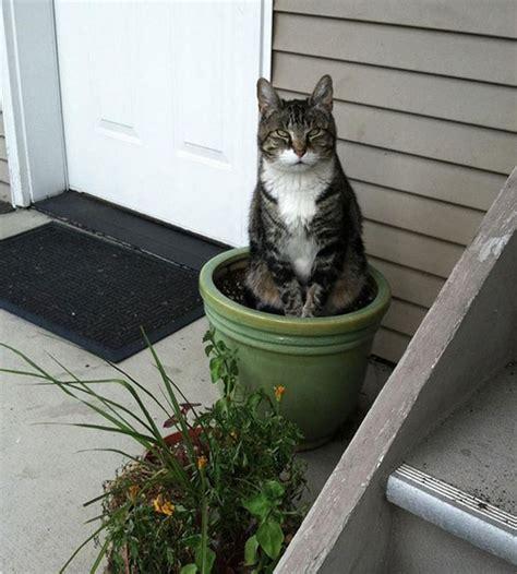plante repulsif chat exterieur plante chere