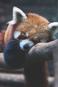 Inner peace....... reminds me of Shifu from Kung Fu Panda ...