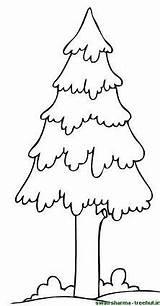 Pine Coloring Tree Trees Template Printable Getcolorings Treehut Swati Sharma sketch template