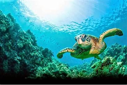 Turtle Sea Wallpapers Ocean Earth