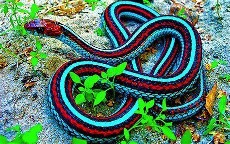 These Colorful Snakes Are Among The Most Beautiful
