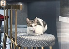 貓B「可樂」被偷走4日後尋回 女主人感動落淚|即時新聞|港澳|on.cc東網