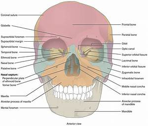 The Skull  U2013 Anatomy  U0026 Physiology