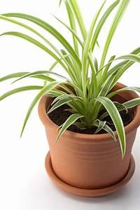 Entretien Plante Verte : drac na tailler et entretenir ooreka ~ Medecine-chirurgie-esthetiques.com Avis de Voitures