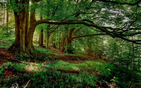 Green Forest Photo Hd by Forest Green Wallpaper Hd Widescreen 174 Wallpaper Cool
