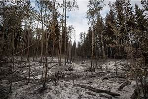 Forest Fires In British Columbia Worst Ever This Summer