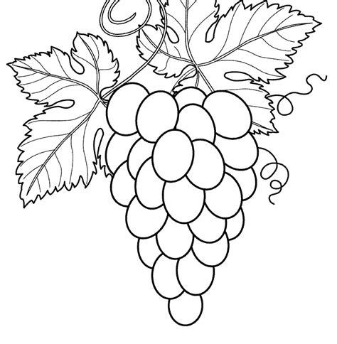 mewarnai gambar buah anggur