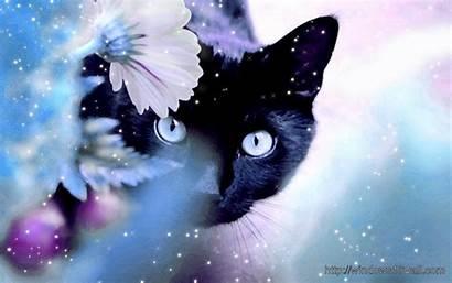 Cat Dark Background Windows Wallpapers Miscellaneous Computer