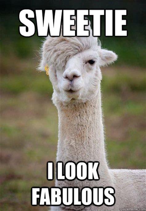 I Am Fabulous Meme - sweetie i look fabulous hipster llama quickmeme