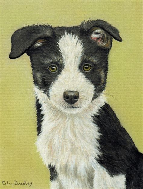 How To Draw A Border Collie Puppy Using Pastel Pencils