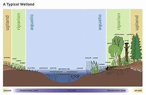 Graphic Of The Parts Of A Wetland