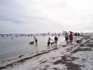 part of dog beach picture of honeymoon island state park With honeymoon island dog beach