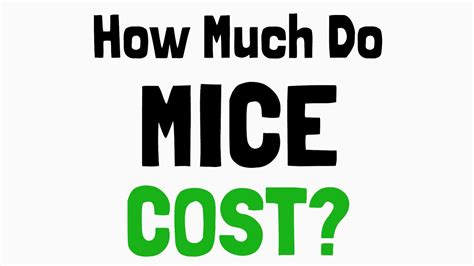 How Much Do Mice Cost? Youtube