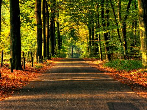 road  autumn wallpaper autumn nature wallpapers  jpg