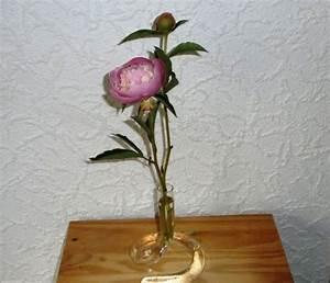 Pfingstrosen In Der Vase : pfingstrosen in der vase pflegen ~ Buech-reservation.com Haus und Dekorationen