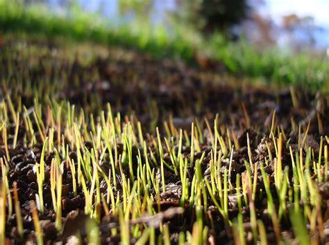 Il Periodo Migliore Per Seminare L'erba Nel Prato Bestprato