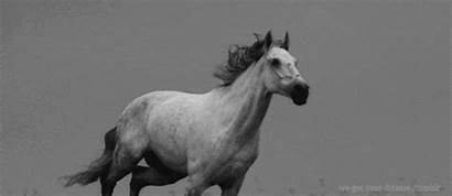 Horse Horses Galloping Giphy Gifs Everything