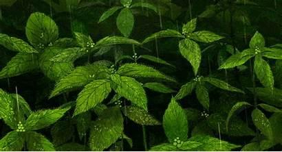 Sea Song Leaves Plant Rain Plants Mint