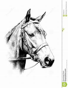 Freehand Horse Head Pencil Drawing Stock Illustration ...