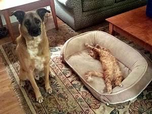 Ich Liege Im Bett Englisch : hau ab ich liege jetzt hier 16 katzen die das bett ihres hundemitbewohners f r sich ~ Orissabook.com Haus und Dekorationen