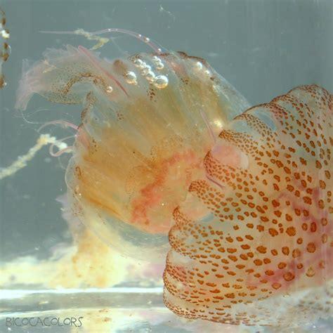 bicocacolors: medusas | Fish pet, Pets, Nature